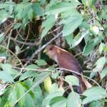 Coucou écureuil